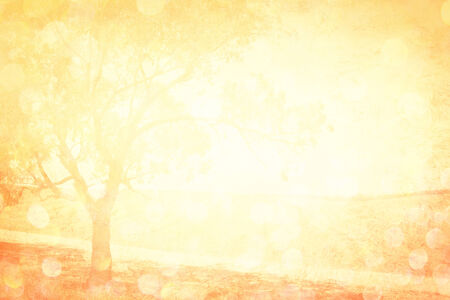 abstract view of field with tree and bokeh golden lights   photo