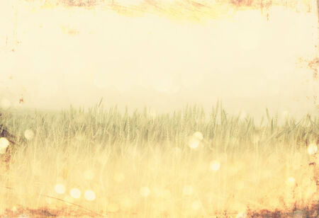 vintage photo of field and lens flare  vintage effect process    photo