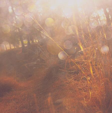 filtered: imagen explosi�n de la luz entre los �rboles del prado filtrada Foto de archivo