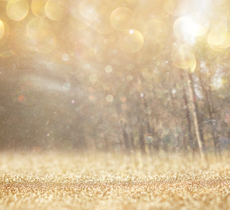 among: abstract photo of light burst among trees and glitter bokeh lights  image is blurred and filtered   Stock Photo