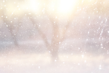 blurred abstract photo of light burst among trees and glitter bokeh lights  filtered image and textured
