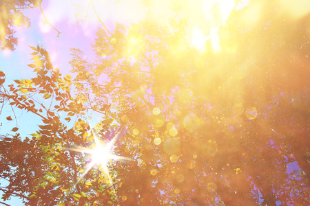 season photos: abstract photo of light burst among trees and glitter bokeh lights  image is blurred and filtered