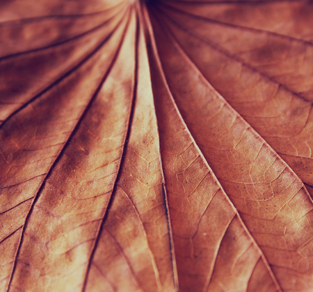 dimond: low key image of Dry leaf on wooden background. selective focus