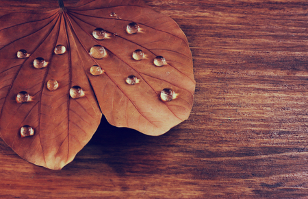 dimond: low key image of Dry leaf with dewdrops on wooden background. selective focus. filtered image