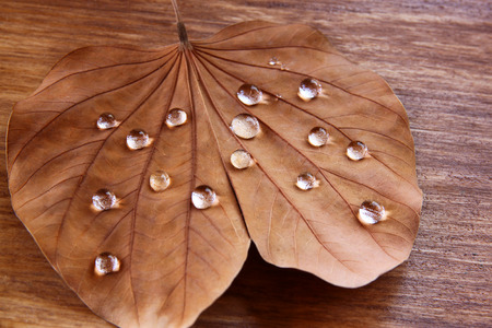 dimond: low key image of Dry leaf with dewdrops on wooden background. selective focus
