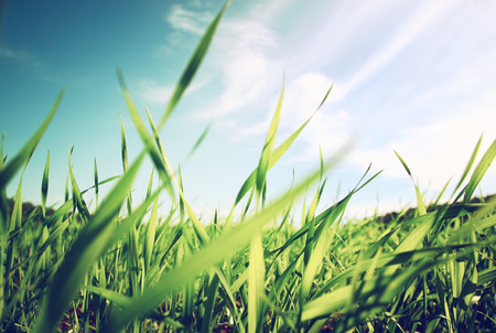 low angle view of fresh grass against blue sky with clouds. freedom and renewal concept Stockfoto