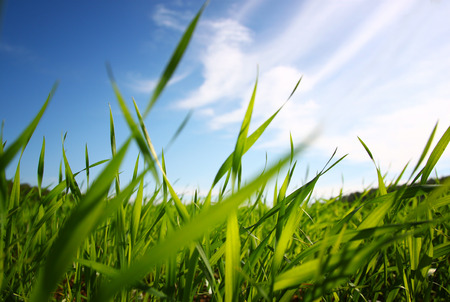 grass: low angle view of fresh grass against blue sky with clouds. freedom and renewal concept Stock Photo