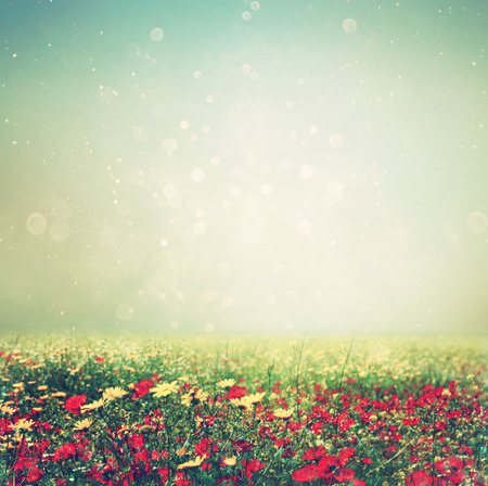 blur effect: abstract photo of wild flower field and bright bokeh lights. cross proccess effect Stock Photo