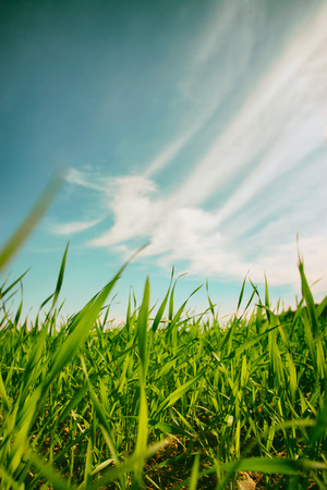 renewal: low angle view of fresh grass against blue sky with clouds. freedom and renewal concept Stock Photo