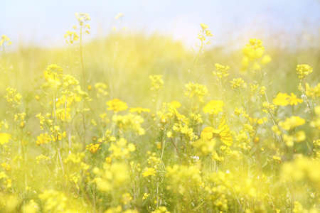 double exposure of flower field bloom, creating abstract and dreamy photo