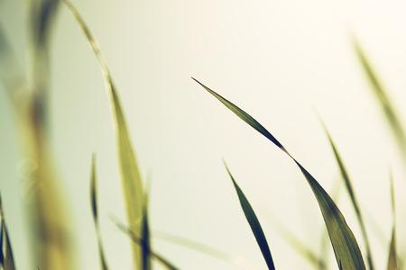 macro photo of fresh grass. retro filtered image photo