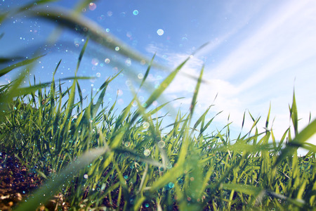 low angle view of fresh grass against blue sky with clouds. freedom and renewal concept photo