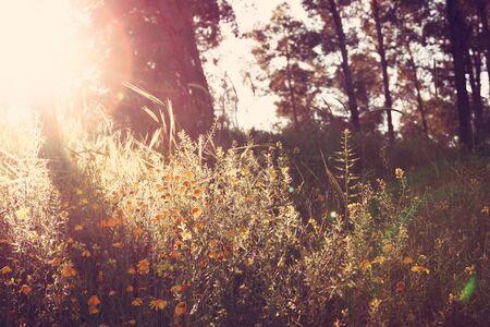 prespective: wildflower background. Instagram effect Stock Photo