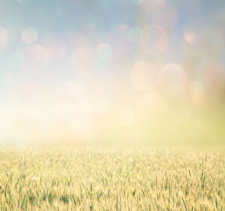 abstract photo of wheat field and bright bokeh lights.