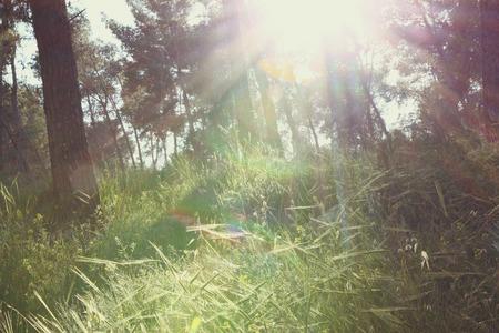prespective: wild flowers bloom under sunset sunbeams through trees. natural light burst .