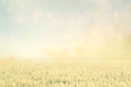 wheat: abstract photo of wheat field and bright sky .