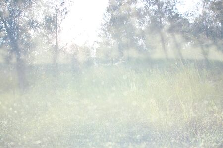 abstract photo of light burst among trees and glitter bokeh lights. image is blurred and filtered . photo