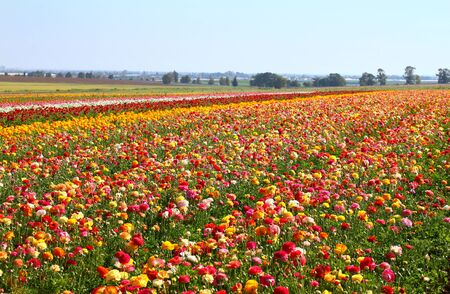 filed: photo of field of flowers , image is vintage style filtered. selective focus