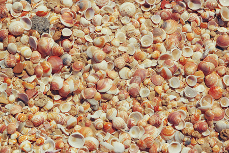 Top view of shells collection on the sand photo