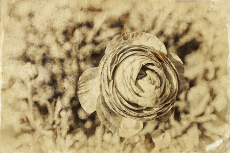 close up photo of flower, textured overlay. black and white old style photo photo
