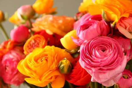 close up image: close up photo of spring flowers