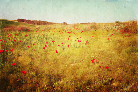 prespective: abstract photo of red poppies field. filtered and textured image