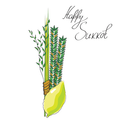 sukkot - four symbols of Jewish holiday Sukkot  species - etrog, willow, palm, myrtle. vector illustration. Illustration