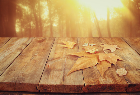 photo background: autumn background of fallen leaves over wooden table and forest backgrond with lens flare and sunset Stock Photo