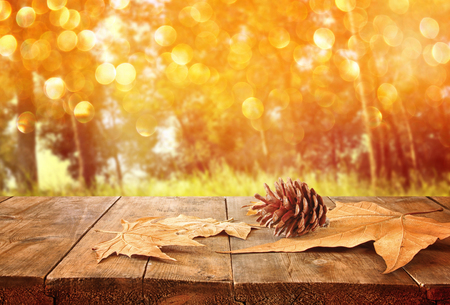 flare: autumn background of fallen leaves over wooden table and forest backgrond with lens flare and sunset Stock Photo