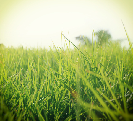 renewal: low angle view of fresh grass against blue sky with clouds. freedom and renewal concept. retro filtered image