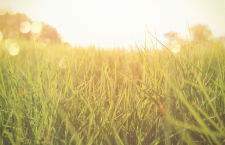 tall: low angle view of fresh grass against blue sky with clouds. retro filtered Stock Photo