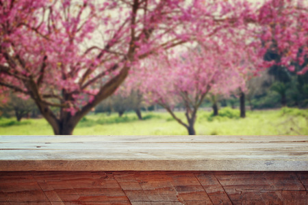 cherry blossom: wooden rustic table in front of Spring Cherry blossoms tree. retro filtered image. product display and picnic concept