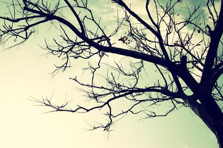 空に対する葉のない木の枝。レトロなスタイルのイメージ 写真素材