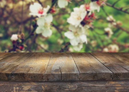 flower garden: wooden rustic table in front of spring white cherry blossoms tree. vintage filtered image. product display and picnic concept