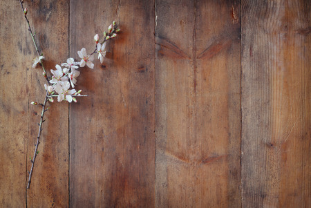 borde de flores: image of spring white cherry blossoms tree on wooden table