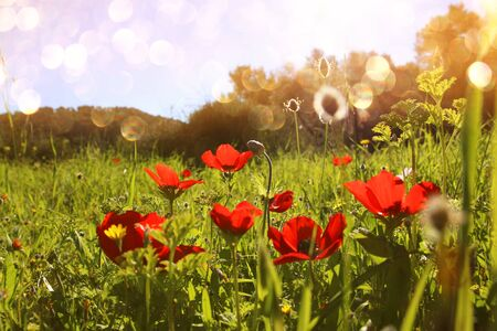 prespective: abstract and dreamy photo with low angle of red poppies against sky with light burst. vintage filtered and toned with glitter overlay