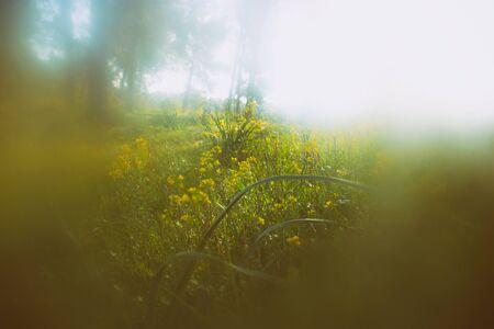 staub: Zusammenfassung Foto von Licht platzen unter Bäumen und Glitzer Bokeh Lichter. Bild ist unscharf und gefiltert. Lizenzfreie Bilder