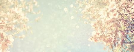 Zusammenfassung verwischt Website Banner Hintergrund des Frühlings weißen Kirschblüten Baum. selektiven Fokus. Jahrgang gefiltert