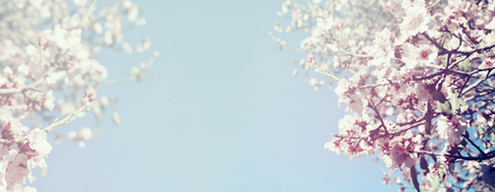 Abstract blurred website banner background of of spring white cherry blossoms tree. selective focus. vintage filtered 免版税图像