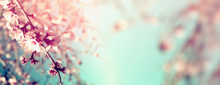 Abstract blurred website banner background of of spring white cherry blossoms tree. selective focus. vintage filtered 写真素材