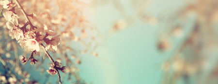 Abstract blurred website banner background of of spring white cherry blossoms tree. selective focus. vintage filtered Stock Photo
