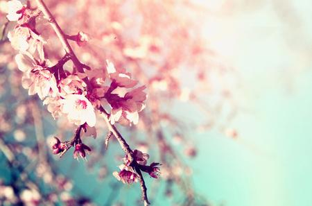 Abstrakt verträumt und unscharfes Bild des Frühlings weißen Kirschblüten Baum. selektiven Fokus. Jahrgang gefiltert Standard-Bild - 52460750