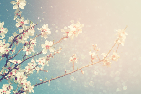 abstract dreamy and blurred image of spring white cherry blossoms tree. selective focus. vintage filtered