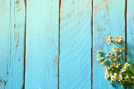 herb: top view image of daisy flowers on blue wooden table. vintage filtered