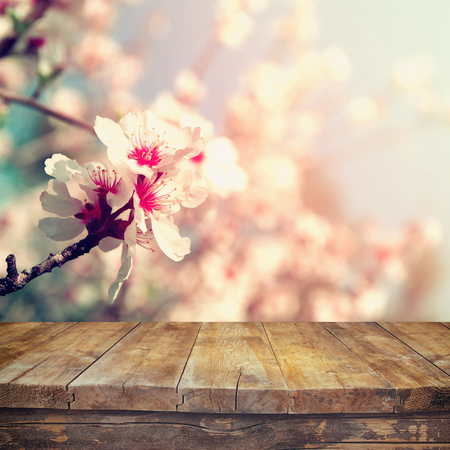 cherry blossom: wooden rustic table in front of spring white cherry blossoms tree. vintage filtered image. product display and picnic concept