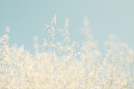 rêveur abstrait et image floue du printemps blanc fleurs de cerisier arbre. mise au point sélective. cru filtré