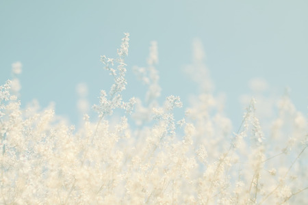 spring: soñadora abstracta y la imagen borrosa de primavera blanco flores de cerezo árbol. atención selectiva. vendimia filtrada