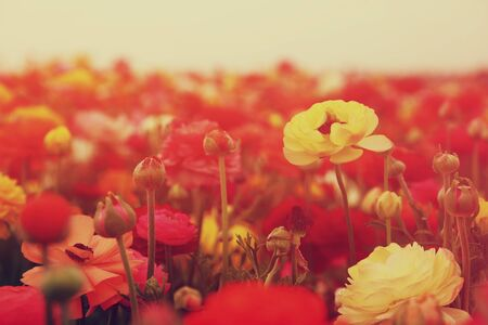prespective: dreamy photo with low angle of spring flowers.