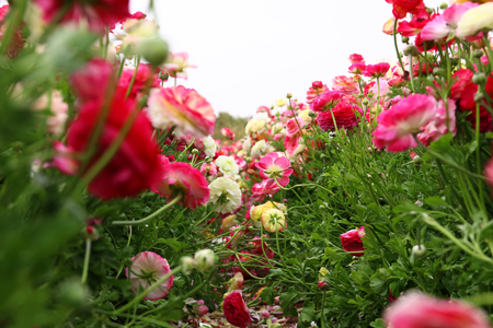 prespective: dreamy photo with low angle of spring flowers