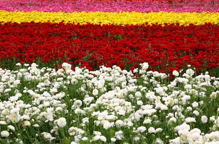 campo de flores: foto de ensueño con bajo ángulo de flores de primavera Foto de archivo